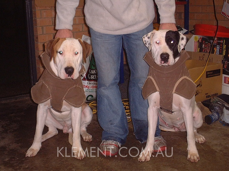Hunting Dogs For Sale Qld